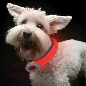 Visto PetSaber Dog Collar Petit
