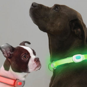 Visto PetSaber Dog Collar