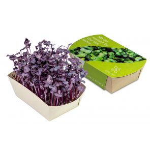 Microgreen - The New Superfoods