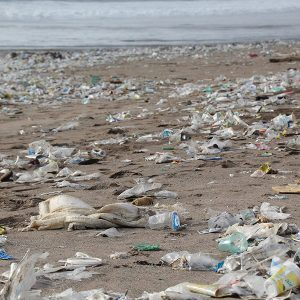Reuse Bottles & Bags To Save Our Oceans