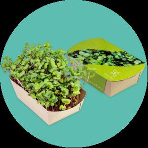 Promotional Microgreens